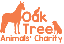 Oak Tree Animals